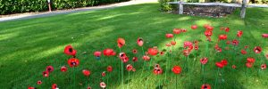 Poppies made by Jigsaw pupils